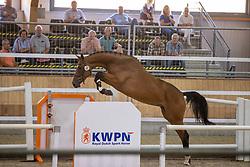 083, Miletto<br /> Nationaal Kampioenschap KWPN<br /> 3 jarige springmerries<br /> © Hippo Foto - Dirk Caremans<br />  15/08/2020