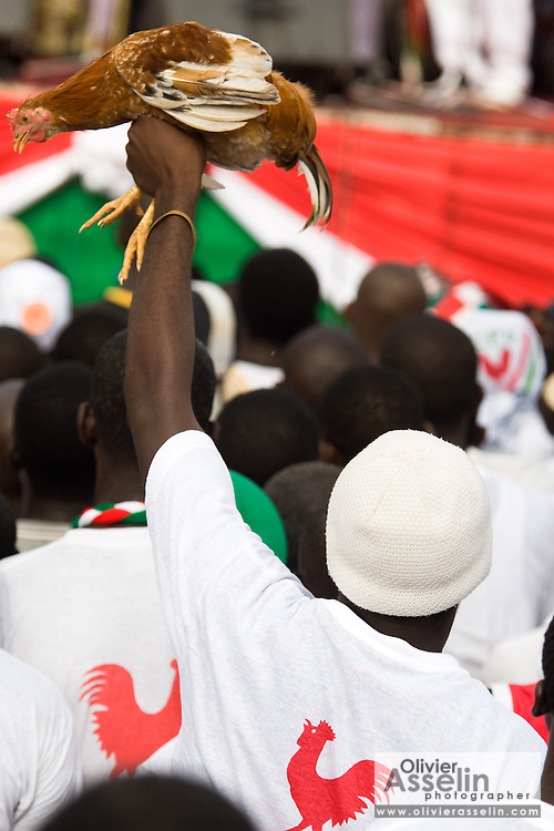 A Convention People's Party (CPP) supporter holds up a live chicken during a rally in Accra, Ghana on Sunday September 21, 2008. The official symbol of the CPP is a rooster.