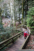 Descend a stairway into Lynn Canyon. Lynn Canyon is a municipal park established in 1912 at 3663 Park Road, in North Vancouver, British Columbia, V7J 3G3, Canada. Phone 604-990-3755.