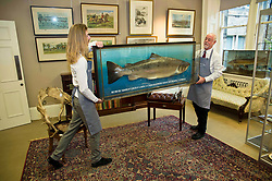 Porters from the auction house prepare a copy of the British record breaking salmon, caught on the River Tay in 1922, which is expected to fetch in excess of &pound;6,000 when it goes under the hammer at Bonhams sporting auction in Edinburgh this week.<br /> <br /> &copy; Dave Johnston/ EEm