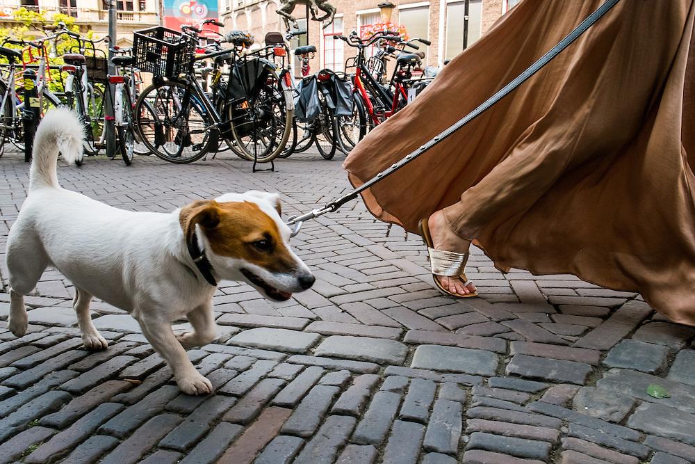 Nederland, Utrecht, 4 juli 2014<br /> Jack Russel wordt uitgelaten in het centrum van Utrecht. Het lijkt er op of hond en baas hun kleding hebben aangepast voor deze gelegenheid.<br /> <br /> Foto (c) Michiel Wijnbergh