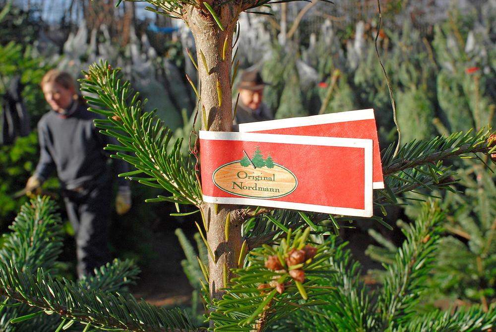 Weihnachtsbaumverkauf - Nordmann Tanne  |  englisch   |