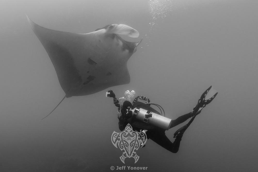 Diver photographs a Pelagic Manta<br /> <br /> Shot in Raja Ampat Marine Protected Area West Papua Province, Indonesia
