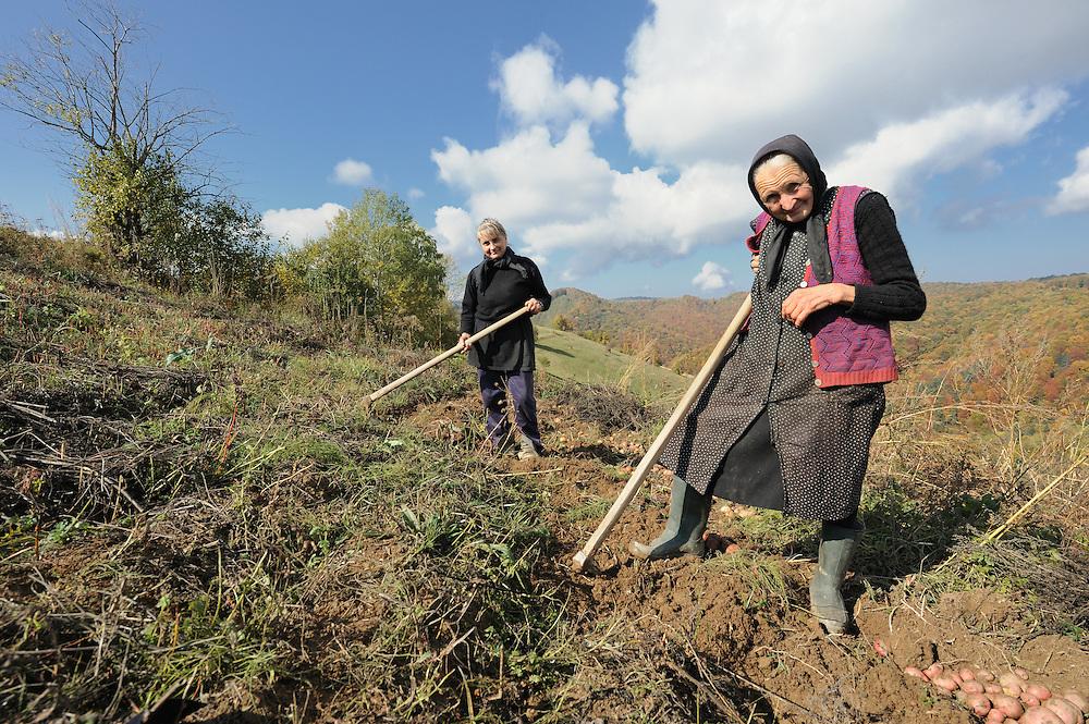 Traditional field work, near Zarnesti, Transylvania, Southern Carpathians, Romania