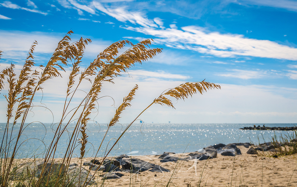 Sea oats wave in the breeze on the east end of Dauphin Island in Alabama. (Photo by Carmen K. Sisson/Cloudybright)