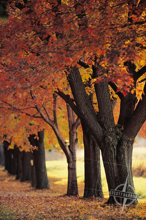 A row of autumn trees.