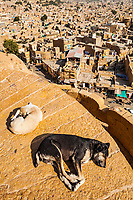 Two dogs sleep in the sun on the walls of Jaisalmer Fort above the city of Jaisalmer, Rajasthan, India.