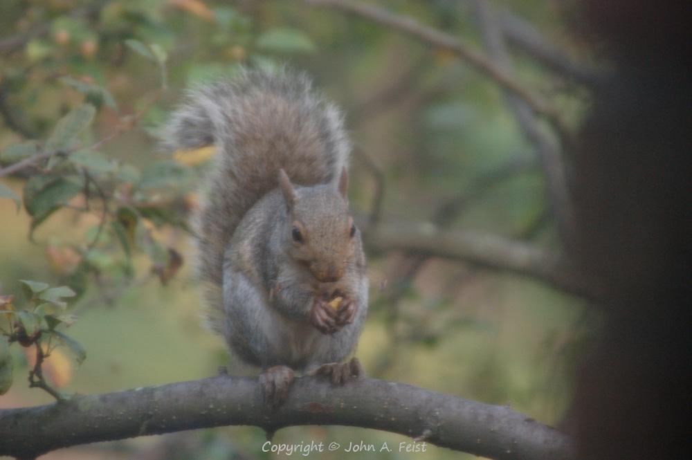 A squirrel preparing to enjoy a snack outside my window.  Hillsborough, NJ