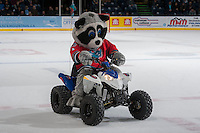 KELOWNA, CANADA - SEPTEMBER 28:  Rocky Racoon takes a spin on the ice during intermission against the Victoria Royals  at the Kelowna Rockets on September 28, 2013 at Prospera Place in Kelowna, British Columbia, Canada (Photo by Marissa Baecker/Shoot the Breeze) *** Local Caption ***