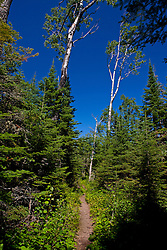 Stoll Memorial Trail, Isle Royale National Park, Michigan, United States of America