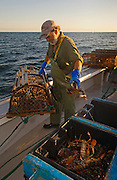 Fisherman Keith Peters removing lobster from traps on board the boat Silver Wave out of Rustico, Prince Edward Island, Canada..