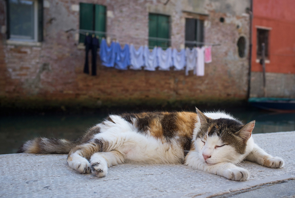 "VENICE, ITALY - AUGUST 27:  A stray car sleeps on the ""fondamenta"" on the edge of a canal on August 27, 2011 in Venice, Italy. Dingo is the Anglo-Venetian association part of the AISPA,  founded in 1965 by Helen Saunders and Elena Scapabolla and is devoted to the welfare of venetian stray cats. Cats in Venice"