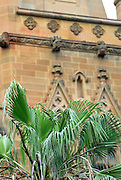 Palm tree and St Mary's Cathedral. Sydney, Australia