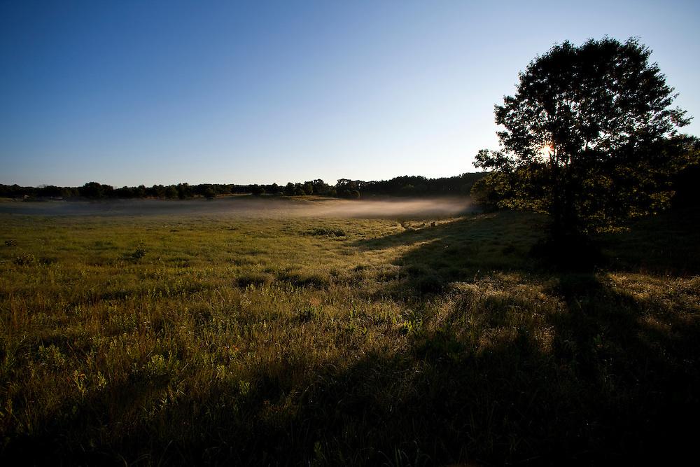 ICF_Prairie