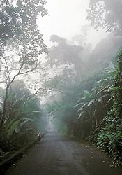Rio de Janeiro; RJ; Brasil. .Mata atlantica com neblina, Parque Nacional da Tijuca,  Estrada das Paineiras/ Tijuca National Park - Atlantic Rain forest; .Foto © Marco Issa/Argosfoto.
