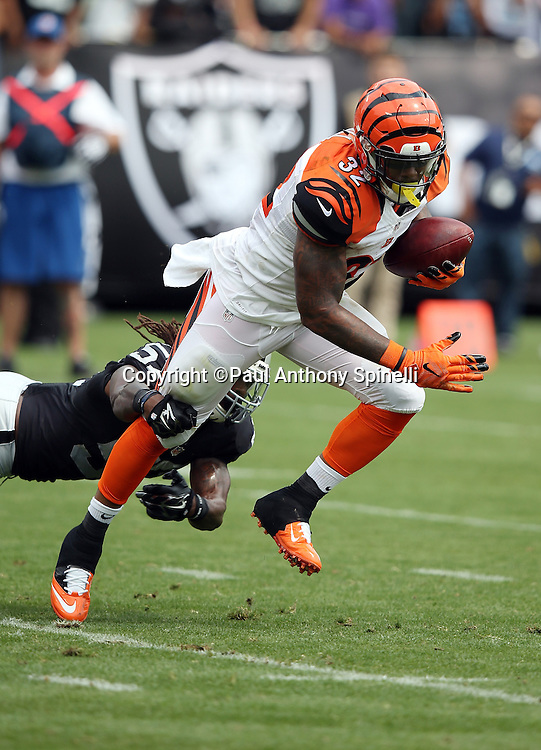 Cincinnati Bengals running back Jeremy Hill (32) dodges a tackle attempt by Oakland Raiders outside linebacker Ray-Ray Armstrong (57) as he runs for a 3 yard touchdown and a 7-0 first quarter Bengals lead during the 2015 NFL week 1 regular season football game against the Oakland Raiders on Sunday, Sept. 13, 2015 in Oakland, Calif. The Bengals won the game 33-13. (©Paul Anthony Spinelli)