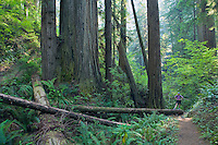 Woman standing next to Redwood trees in Redwoods Forest National Park Northern California Coast USA.