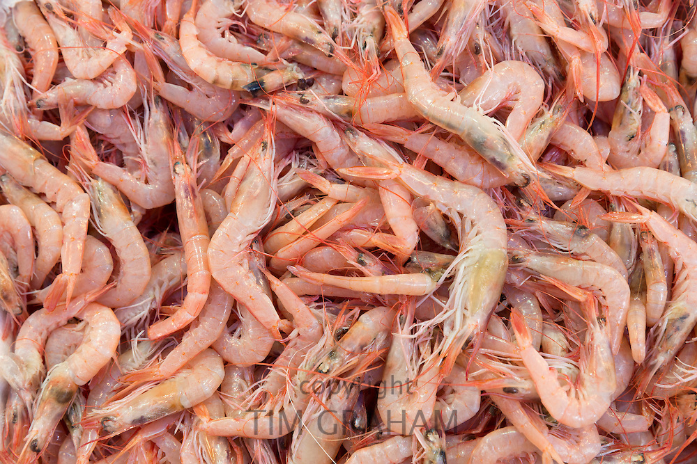 Fresh cooked prawns - shrimps - seafood for sale at food market in Kadikoy district Asian side Istanbul, East Turkey