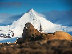 Svalbard #20 2014