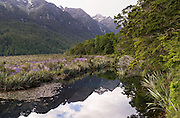 Looking over Mirror Lake on the drive from Te Anau to Milford Sound, Fiordland National Park, Southland, New Zealand