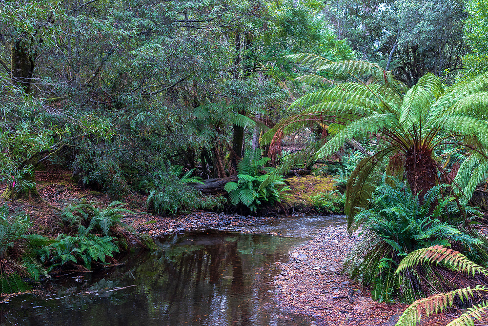 A small stream quietly meanders its way along in a Tasmanian rain forest.