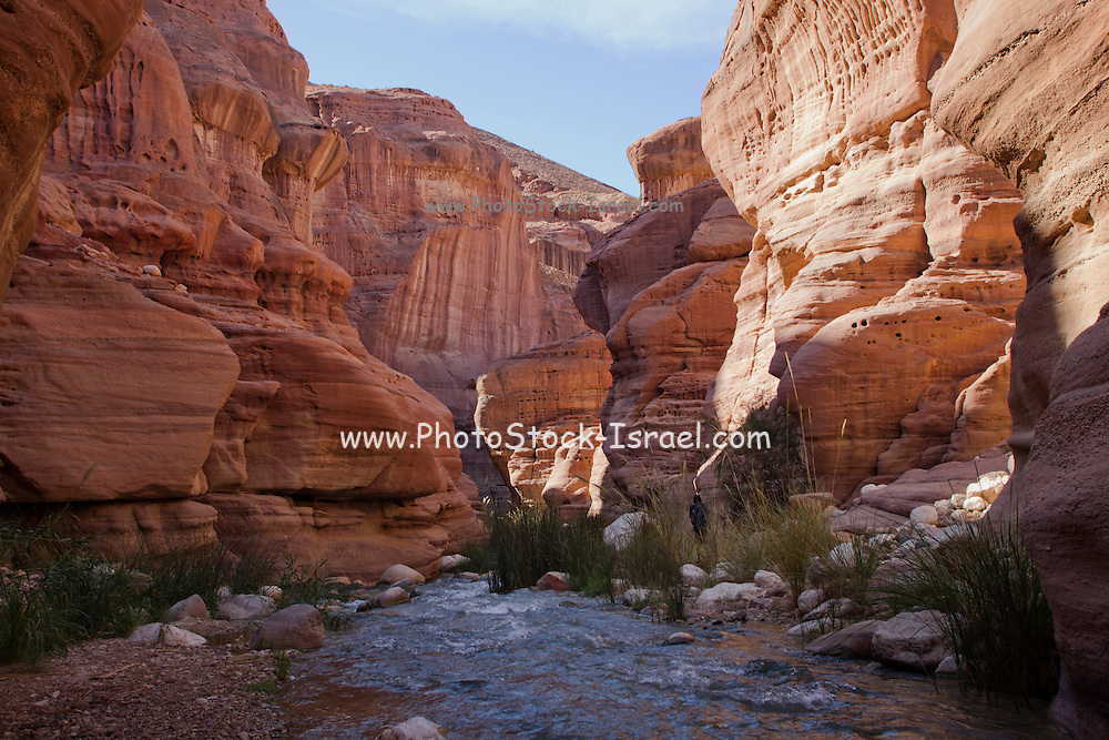 Wadi Zered (Wadi Hassa or Hasa) in western Jordan. A sand stone canyon with frash running water