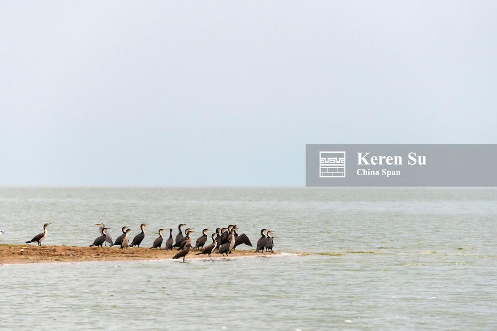 Cormorants, Kazinga Channel, Queen Elizabeth II National Park, Uganda