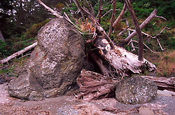 Rocks and Fallen Trees near Sand Point,  Olympic National Park, Washington, US