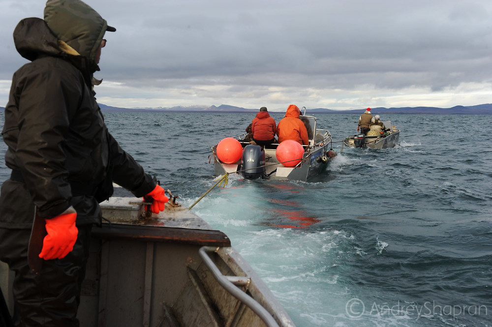 Traditional whale hunt in Chukotka, Russia