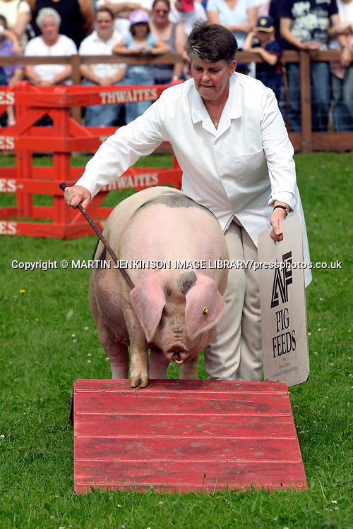 One Man and His Pig Display Team or in this case one woman and her Gloucester Old Spot, Great Yorkshire Show.