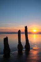 Remnants of Old Pier Pilings at Ocean Beach near Fort Funston, San Francisco, California