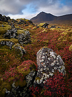 Autumn colours at Búðahraun Lava Field, Snæfellsnes Peninsula, Iceland,