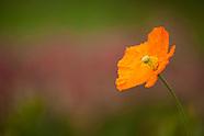 20110526 Chatfield Flowers