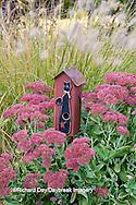 63821-22306 Birdhouse in garden with Autumn Joy Stonecrop (Sedum spectabile 'Autumn Joy') and Fountain Grass (Pennisetum setaceum) Marion Co., IL
