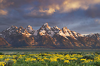 Sunrise over the Teton Range from wildflower meadows of Antelope Flats, Grand Teton National Park Wyoming