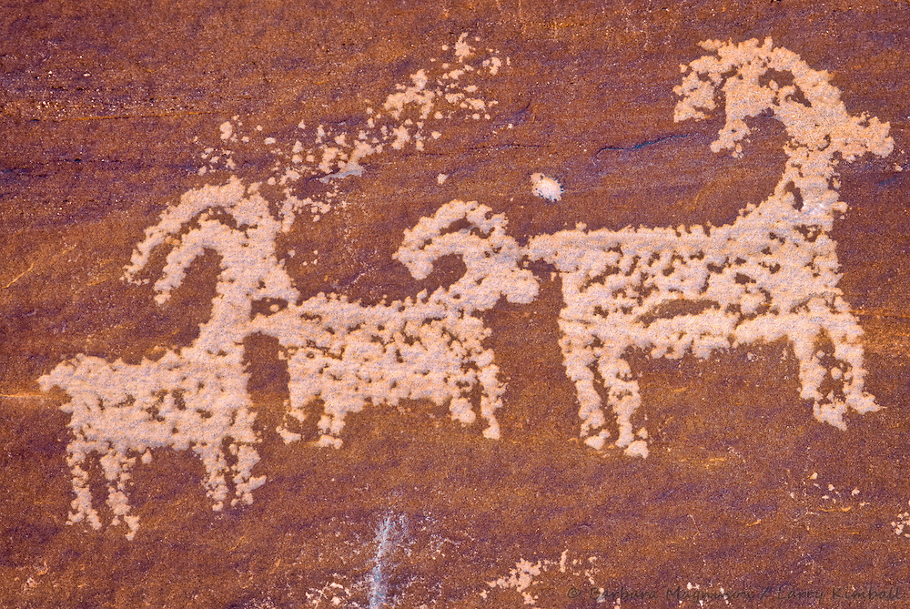 Desert Bighorn Sheep Petroglyphs; Wolf Ranch, Arches National Park, Utah