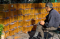 A man watches the birds in cages at the Yuen Po Street Bird Garden in Kowloon, Hong Kong, China.