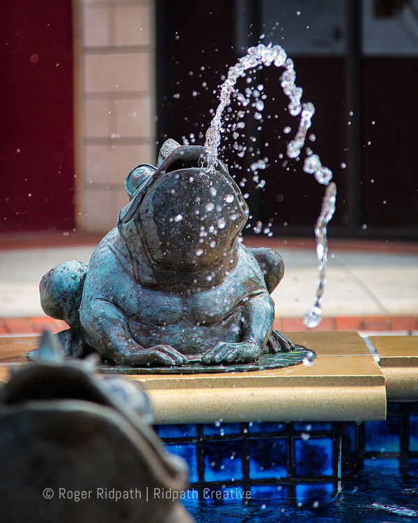 Fountain Frog At Zona Rosa
