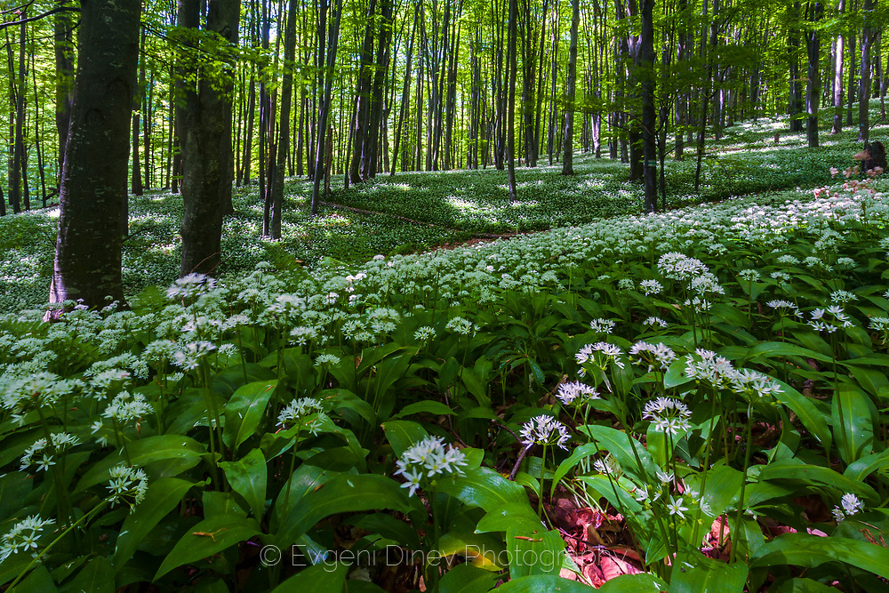 Green meadow in the forest