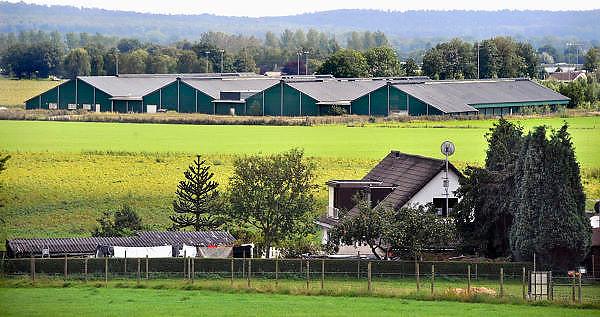 Nederland, Groesbeek, 17-8-2011Raad van State vernietigt milieuvergunning mega kippenstal. In 2002 bouwde agrarisch ondernemer Van Deurzen een nieuw stallencomplex, legbatterij, voor 300.000 kippen in Groesbeek. Voor deze locatie blijkt het, vanwege de stanknormen, Wet Geurhinder, wettelijk onmogelijk om een milieuvergunning af te geven.Al met al staat het bedrijf er al vijf jaar, waarvan driekwart van de tijd illegaal. Morgen wordt het complex geveild omdat schuldeisers niet meer betaald worden.Foto: Flip Franssen/Hollandse Hoogte