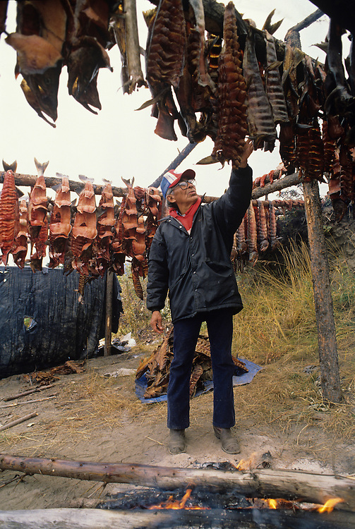 USA, Alaska, Athabascan Indian David John smokes salmon caught at fish camp along Yukon River near Fort Yukon