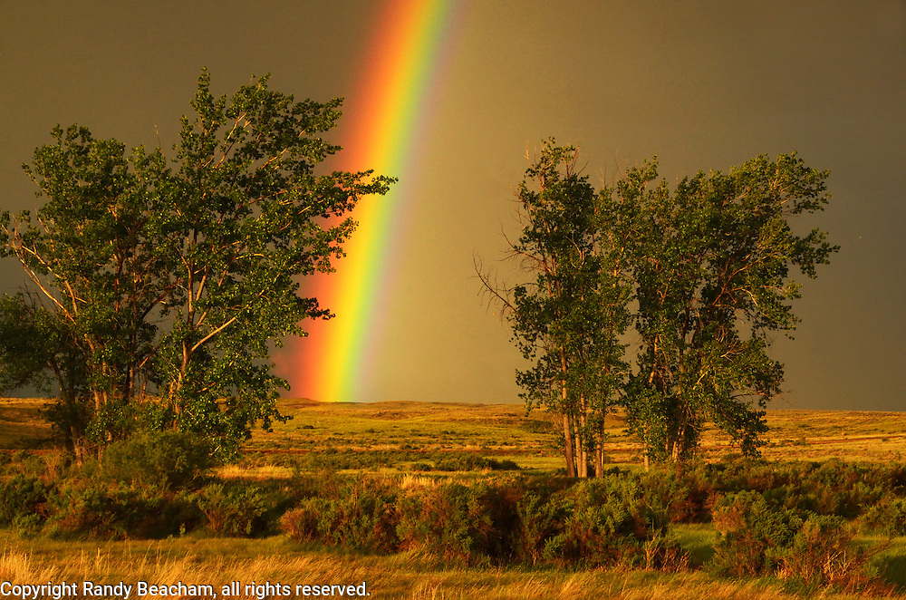 Rainbow and cottonwoods in the Great Plains of Montana at American Prairie Reserve. South of Malta in Phillips County, Montana.