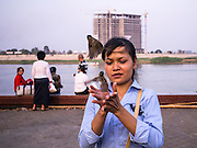 """31 JANUARY 2013 - PHNOM PENH, CAMBODIA: A Cambodian woman releases birds in honor of former King Norodom Sihanouk. Releasing birds or fish is a traditional form of Buddhist merit making. Norodom Sihanouk (31 October 1922- 15 October 2012) was the King of Cambodia from 1941 to 1955 and again from 1993 to 2004. He was the effective ruler of Cambodia from 1953 to 1970. After his second abdication in 2004, he was given the honorific of """"The King-Father of Cambodia."""" Sihanouk served two terms as king, two as sovereign prince, one as president, two as prime minister, as well as numerous positions as leader of various governments-in-exile. He served as puppet head of state for the Khmer Rouge government in 1975-1976. Most of these positions were only honorific, including the last position as constitutional king of Cambodia. Sihanouk's actual period of effective rule over Cambodia was from 9 November 1953, when Cambodia gained its independence from France, until 18 March 1970, when General Lon Nol and the National Assembly deposed him. Upon his final abdication, the Cambodian throne council appointed Norodom Sihamoni, one of Sihanouk's sons, as the new king. Sihanouk died in Beijing, China, where he was receiving medical care, on Oct. 15, 2012. His funeral procession, which will wind through Phnom Penh is Friday, Feb.1 and his cremation is on Feb. 4, 2013. Over a million people are expected to attend the service.     PHOTO BY JACK KURTZ"""