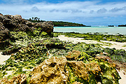 low wide-angle colour image of Eton Beach, Efate, Vanuatu with seaweed covered coral in foreground