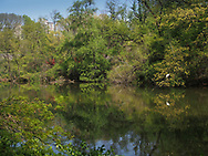The Pond in Central Park with a view toward Hallett Nature Sanctuary