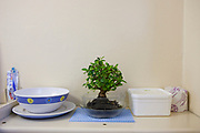 A Bonsai tree on a desk, in a prisoners cell at HMP Kingston. Portsmouth, United Kingdom.