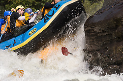 An unidentified whitewater kayaker is run over by rafters as they go through the rapids at Pillow Rock on the Gauley River during American Whitewater's Gauley Fest weekend. The upper Gauley, located in the Gauley River National Recreation Area is considered one of premier whitewater rivers in the country.