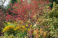 Ballyrobert -   Northern Ireland, Autumn