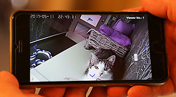 EXCLUSIVE Hotel Kitty in Kent claims to be Britain's most lavish cattery, offering cats temperature-controlled suites, spa facilities, pampering packages and a gourmet menu. High-tech cameras are placed in every room so owners can see their pets anytime via smartphones. A week-long stay in one of the best suites can cost up to £245 with meals an additional £4 each.<br /> <br /> <br /> <br /> These Pictures are for use on Printed Media or That company,s Website.No Social media use.Without Prior Consent from the Copyright Owner.Please see Rights Usage Terms.<br /> <br /> <br /> <br /> <br /> <br /> <br /> <br /> 