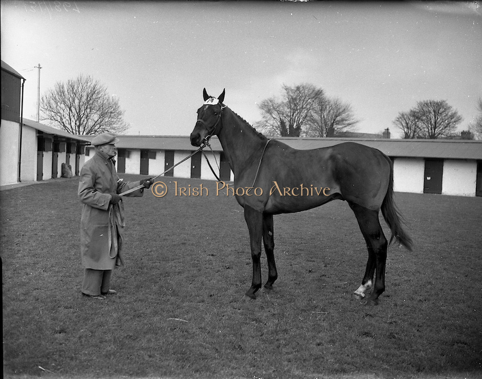 """13/02/1953<br /> 02/13/1953<br /> 13 February 1953<br /> Annual New Years (horse) Sales at the R.D.S., Ballsbridge, Dublin. <br /> """"Iron City"""" 4 year-old Brown Gelding sold for 2,200 guineas."""